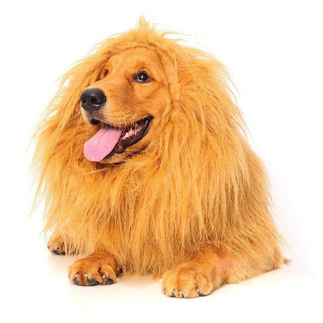 Костюм льва для собак 1