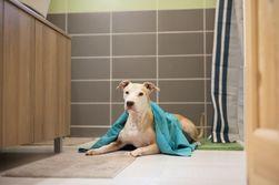 PET TOWEL Antibakteriální osuška pro zvířata L/XL PD_1296696