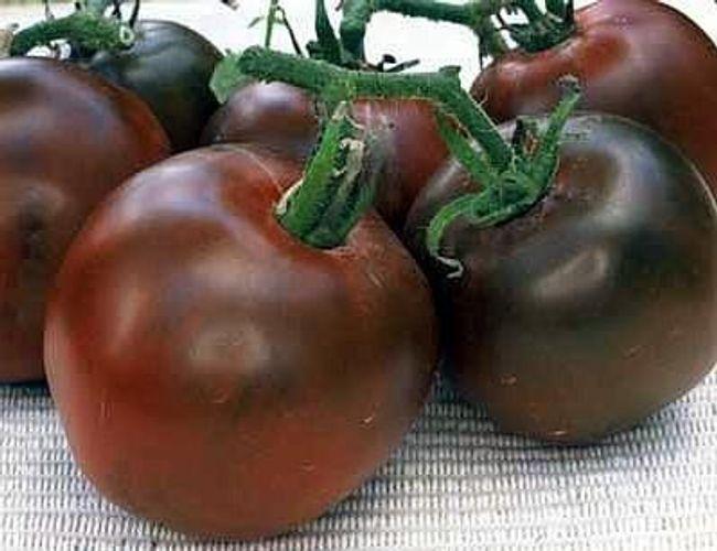 Semena speciální odrůdy rajčete  1