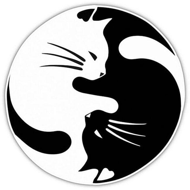 Nalepka mačka yin yang 1