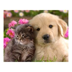DIY slika od kamenja - pas i mačka