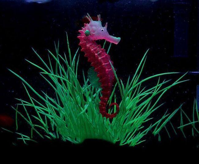 Светящийся морской конек для аквариума- 3 расцветки  1