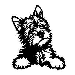 Naklejka na samochód - Yorkshire Terrier