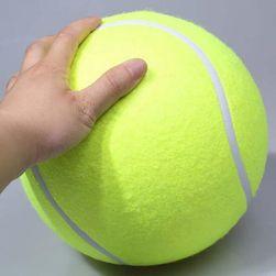 Большой теннисный мяч для собак