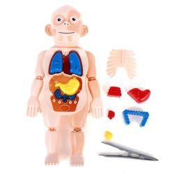 Zabawka edukacyjna dla dzieci GD05