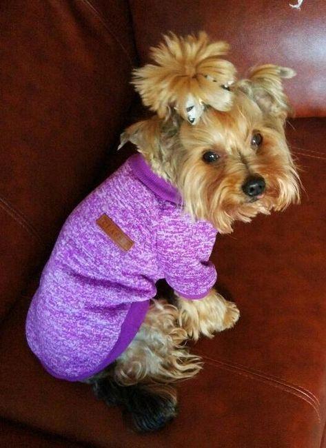 Köpek sweatshirt 1
