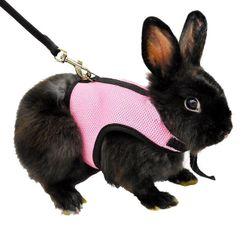 Popruhy s vodítkem na králíčka - 3 barvy