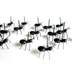Palice - mravlje