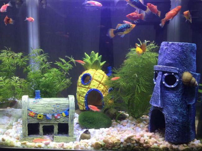 akváriumi vasalók