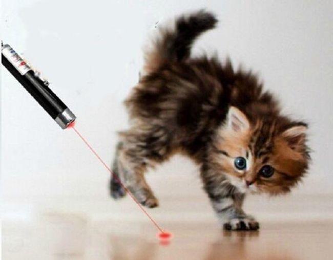 Лазер для кошки- 2 в 1 1