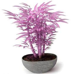 Kolorowe drzewka bonsai - 20 nasionek