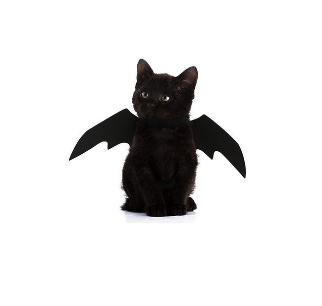Kedi kostümü Bat 1