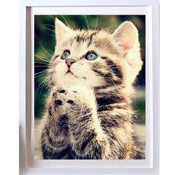 5D изображение с коте