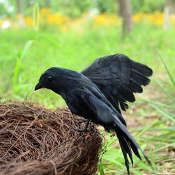 Отпугиватель птиц OP74