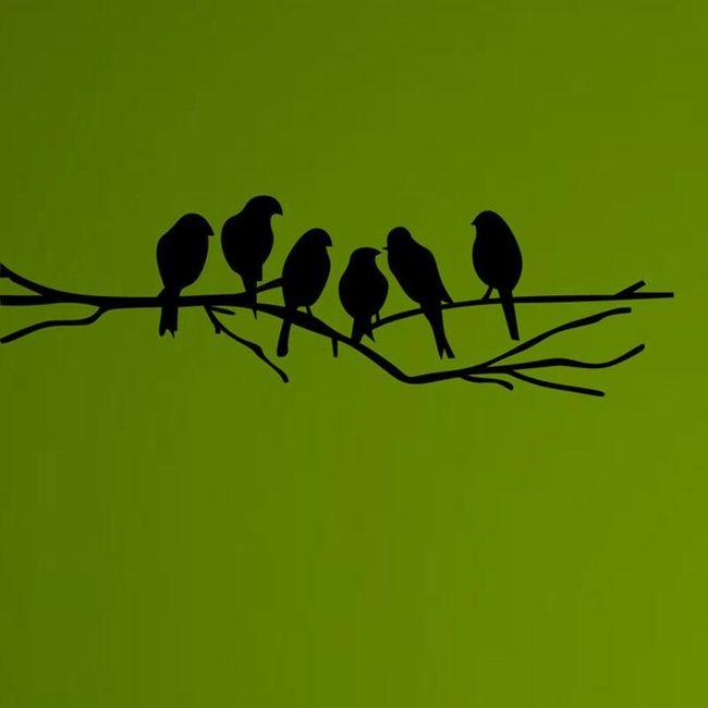 fotky pánských ptáků