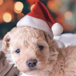 Рождественская шапка Санта-Клауса Santa009