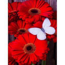 Imagine DIY cu pietre - flori de gerberă cu fluture