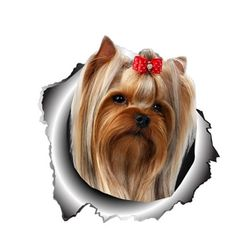 Araba sticker Yorkie