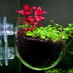 Staklena saksijica za akvarijum