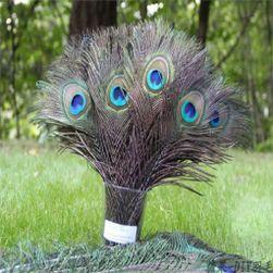 10 dekorativnih paunovih pera