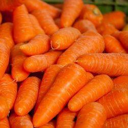 Моркови RUBÍNA