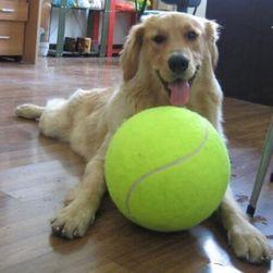 Hatalmas felfújható teniszlabda kutyáknak