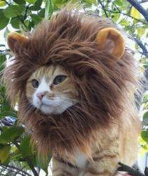 Лъвска грива за кучета или котки