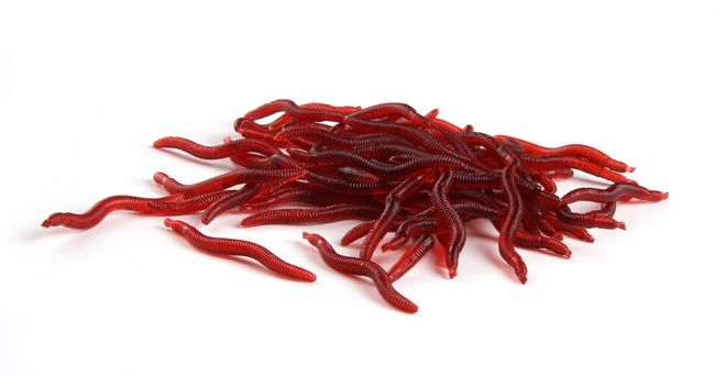 Gumová rybářská návnada v podobě žížaly - 100 kusů 1