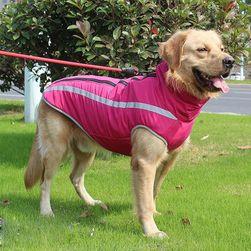 Köpek ceketi Archie