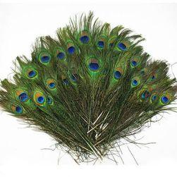 Pióra pawia 23 - 30 cm - 20 sztuk
