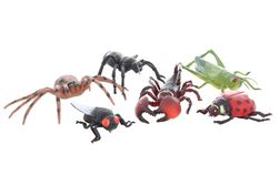 Hmyz velký SR_827437