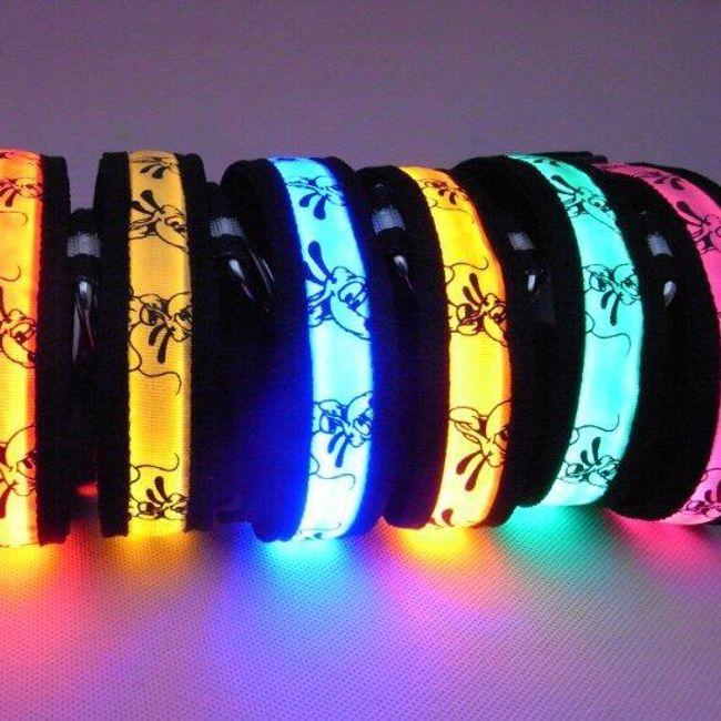 Zgardă LED pentru animale de companie - 5 culori 1