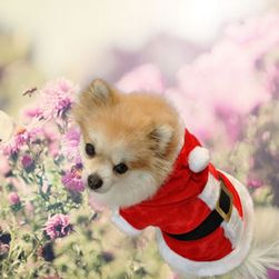 Świąteczny płaszczyk dla pieska w postaci Świętego Mikołaja