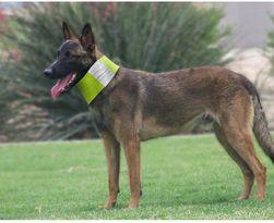 Reflexní šátek pro psa HU15