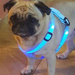 Nylonowa uprząż LED dla psów - 6 kolorów
