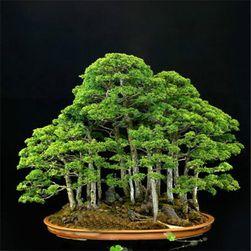 20 nasionek bonsai juniper