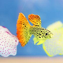 Veštačka zlatna ribica