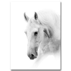 Imagine cu cal alb