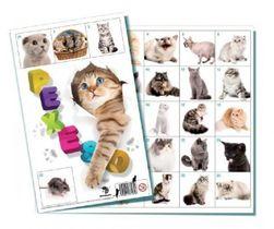Pexeso Kočky společenská hra 32 obrázkových dvojic RM_26002626