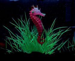 Светящийся морской конек для аквариума- 3 расцветки