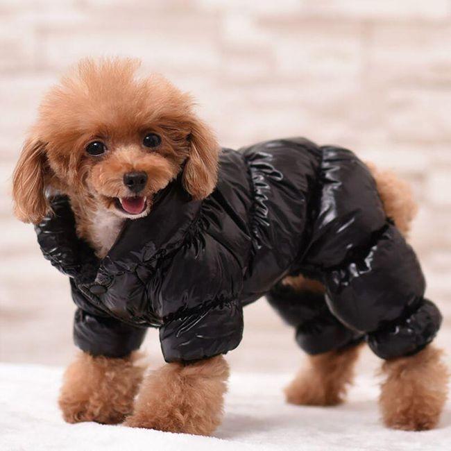 Prošivana jakna za pse - 3 boje 1