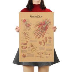 Plakát Human